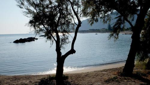 albero_spiaggia_figura_intera
